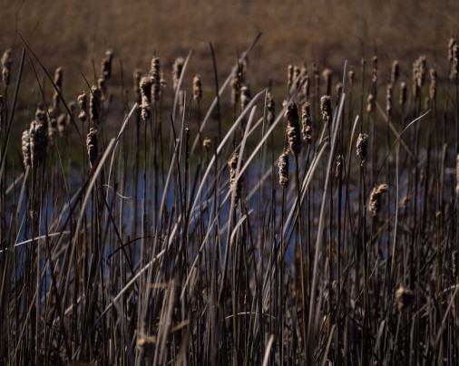 North Wetlands 2